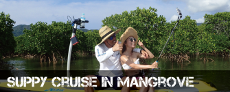 SUPPY Cruise in Mangrove Course