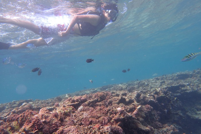 SUPPY and Snorkeling Course写真04